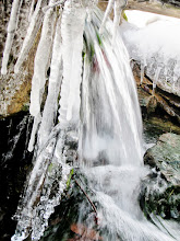 Photo: Icicles by a waterfall at Cox Gardens and Arboretum in Dayton, Ohio.