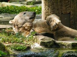 Photo: Knut hat sich vor dem kleinen Pool niedergelassen ;-)