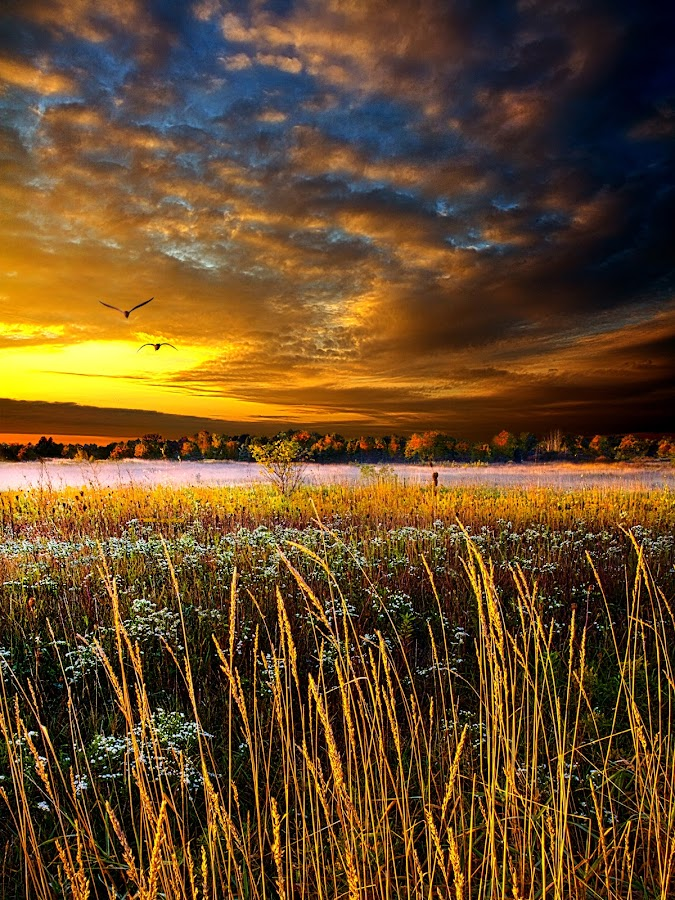 Foxfire Suite by Phil Koch - Landscapes Prairies, Meadows & Fields ( summer. spring, wisconsin, vertical, natural light, photograph, environement, farmland, yellow, phil koch, leaves, spring, sun, photography, love, farm, nature, autumn, horizons, flowers, inspired, clouds, office, orange, green, twilight, agriculture, horizon, myhorizonart, scenic, morning, portrait, field, winter, red, seasons, blue, national geographic, serene, sunset, peace, fall, meadow, earth, sunrise, landscapes, floral, inspirational )