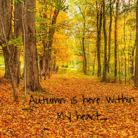 Autumn Heart by Pamela Hammer - Typography Quotes & Sentences ( fall leaves, illustration, typography, woods )