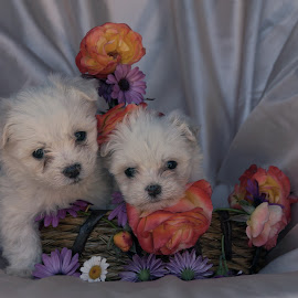 Puppies by Lize Hill - Animals - Dogs Portraits