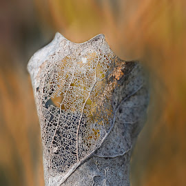 Natural lace dress by Daly Sda - Nature Up Close Leaves & Grasses ( nature, leaves, close up,  )
