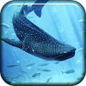 Whale Shark Live Wallpaper icon