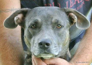 Photo: One of the mother dogs. Blue and tan.