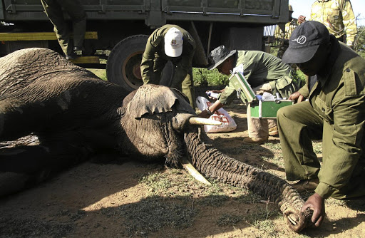 Jumbo leap: Kenya Wildlife Service rangers tend to an elephant before it is moved from Narok North to Maasai Mara reserve. Africa's many vast wildlife areas are set to benefit from new technology devised by Vulcan which aims to serve as an early warning system against potential threats. Picture: REUTERS