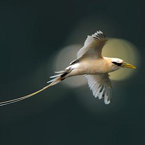 The Power of Bird by Andi Albayquni - Animals Birds ( bird, bird of prey, wildlife, animal )
