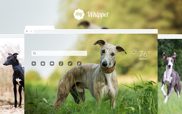My Whippet HD Wallpapers New Tab