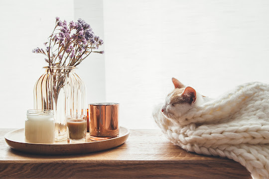 End table with decor next to furniture with blanet and cat