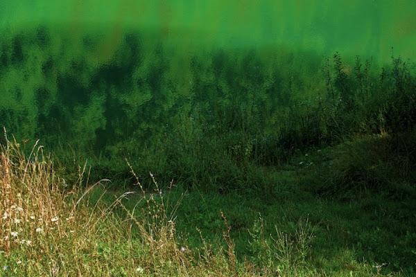 Deep Green di gianni87