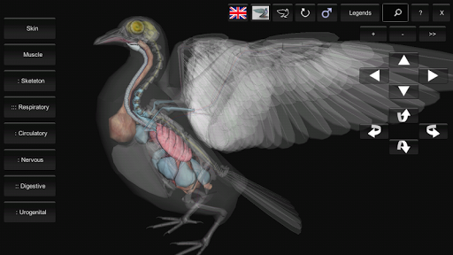 3D Bird Anatomy