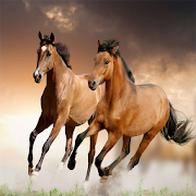 Horse Wallpapers For iPhone 8
