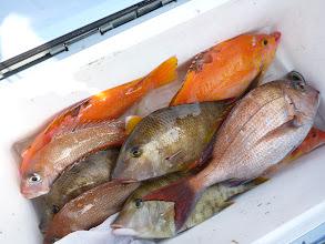Photo: オガワさんの釣果です。 マダイの喰いが悪かったです。