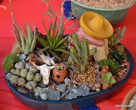 Photo: Mexican themed dish garden