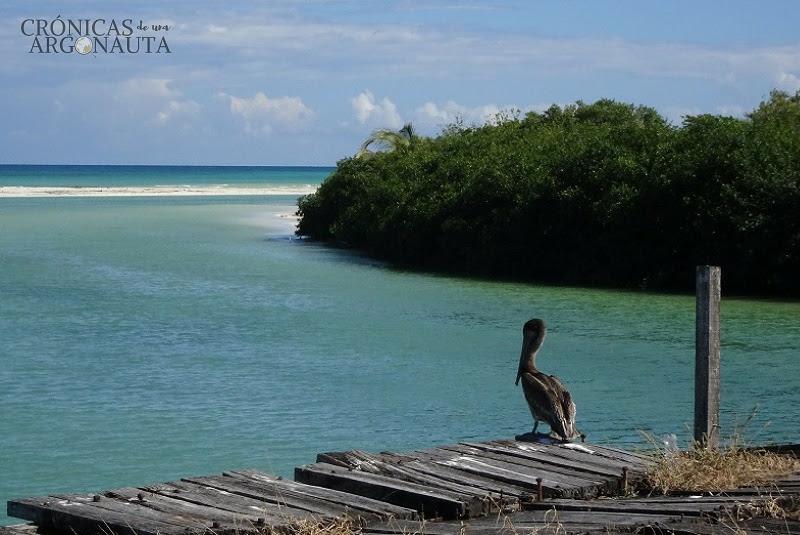 pelicano de tulum