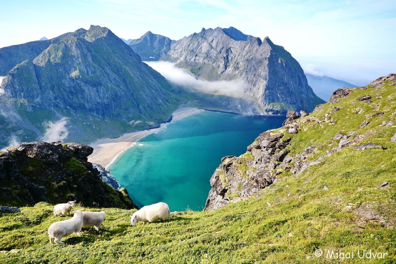 45-days-nomadic-biking-img06-lofoten-sheep