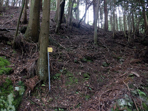 林道から巡視路を見る(先程の鉄塔はNo.402)