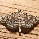 Bog Lygropia Moth