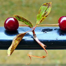 CHERRIES by Wojtylak Maria - Food & Drink Fruits & Vegetables ( red, arrangement, close up, fruits, cherries, juicy, sweet, food )