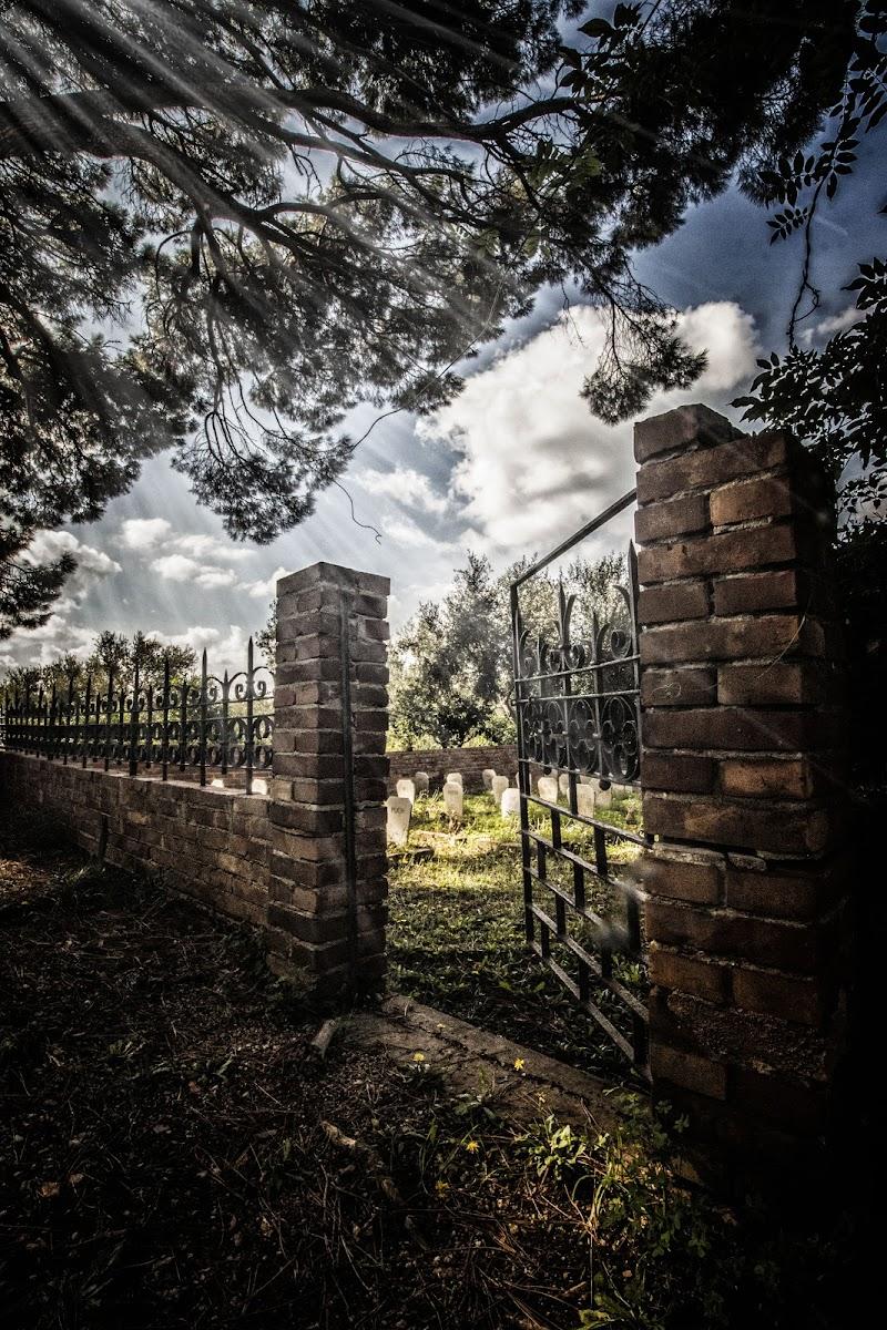 Cimitero dei cani. di Mony.M