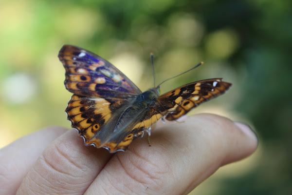Farfalla amica di A.Monte