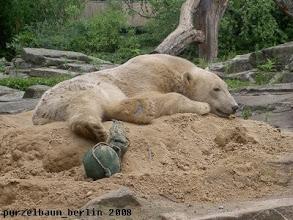 Photo: Knut mag es heute gemuetlich ;-)