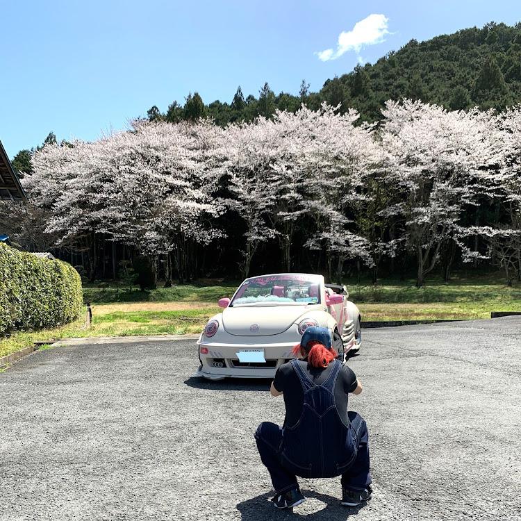 マークII JZX100のこだま千本桜,小川町,メデューサ号,桜とコラボ,SSS(saitama street stage)に関するカスタム&メンテナンスの投稿画像2枚目