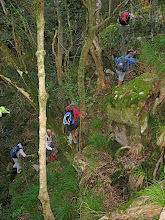 Photo: Very steep ascent on leaf mould under the trees