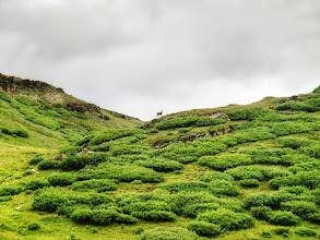 Photo: Near Kokomo Pass