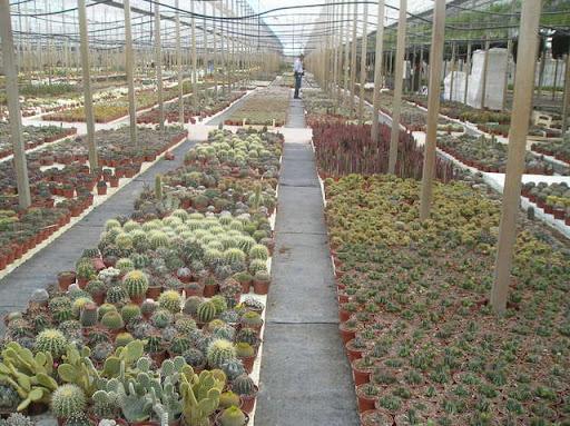 vivero serrano cactus cacti