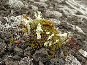 Photo: вот такая там растительность, в мертвом лесу-то.