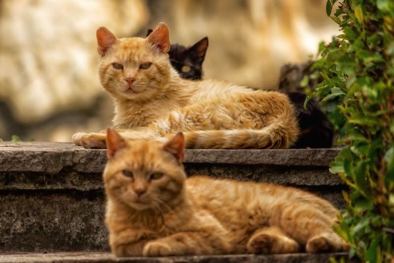 Tre moschettieri di Concetta Caracciolo