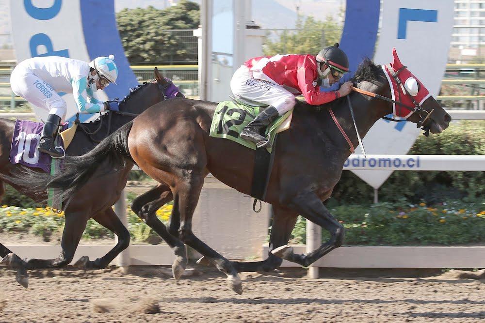 Flaminio Rufo (Rydilluc) gana Condicional (1300m-Arena-HCH). - Staff ElTurf.com