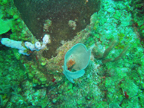 Photo: Feather-duster worm