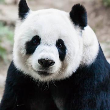AnimalSnap - Identify Logo