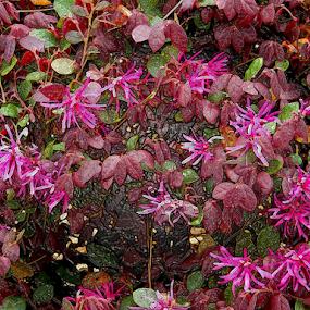 red flowers by Edward Gold - Digital Art Things ( pink flowers, flowers, red leaves, green leaves, digital art,  )