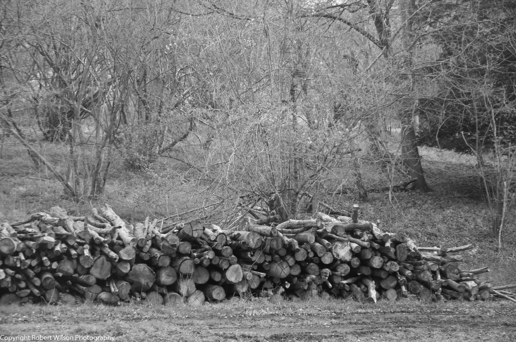 Photo: A log pile in the woods