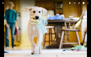 Screenshot of SmugMug