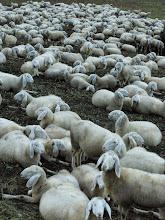 Photo: Mondo pecora.