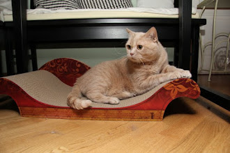 Photo: Eine Erdbeerprinzessin braucht auch entprechendes Mobiliar von cat-on!