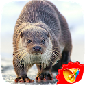 Otter Sounds icon