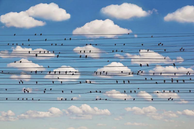 Photo: Concerto for Birds
