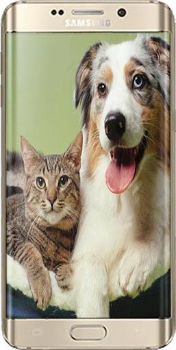 Cani E Gatti Video Divertenti Apk Download Apkpureco