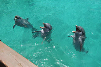 Photo: Some Dolphins at Blue Lagoon