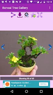 Bonsai Tree Gallery - náhled
