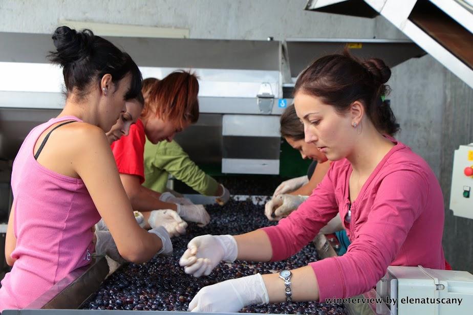 vendemmia, post harvest, grape harvest, roccapesta, destemming, diraspatura
