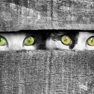 Yellow and Green Eyes.jpg