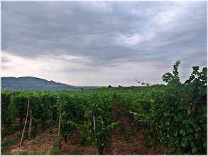Photo: paisaje de Alsacia ( Francia) http://www.viajesenfamilia.it/Alsacia.htm