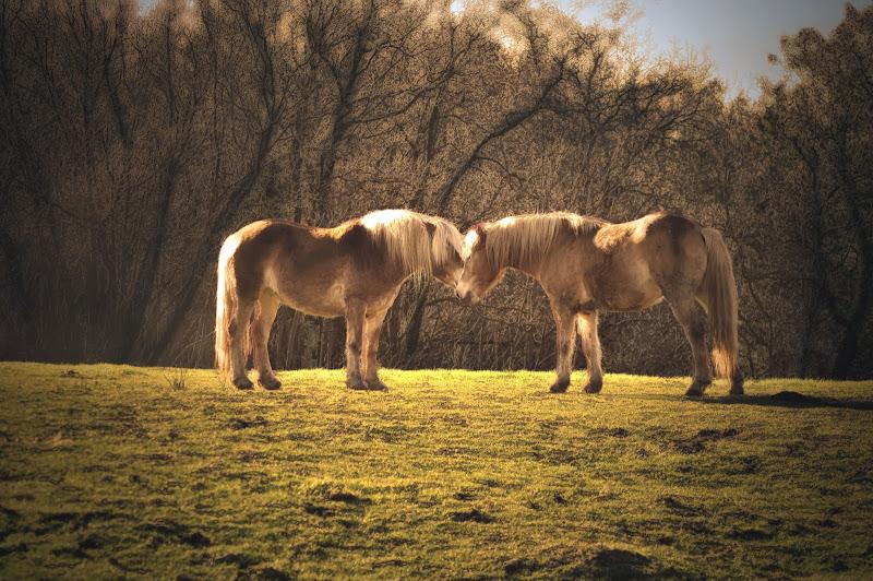 Cavalli di PaoloFranceschini