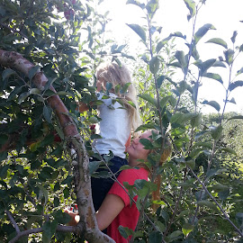 Apple Picking by Bill Givens - Novices Only Portraits & People ( assisting, apple picking, android, amateur, sisters, picking, help, mobile phone, lifting, family, apples, novice, apple tree,  )
