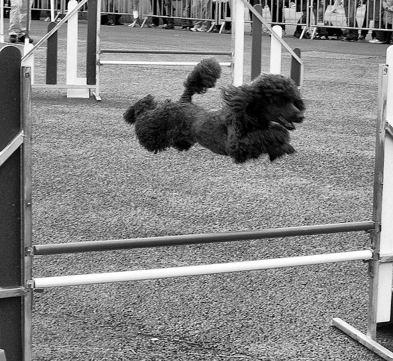 cagnolino volante di tizianadesy